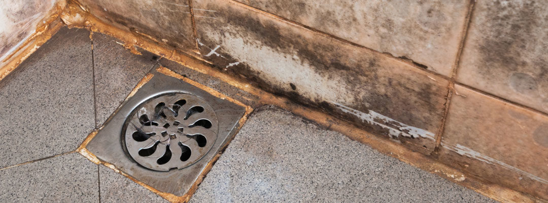 How to Prevent & Get Rid of Mold in the Bathroom