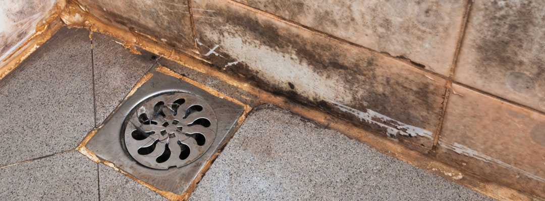 How To Prevent Get Rid Of Mold In The Bathroom Servicemaster Restoration By Advanced